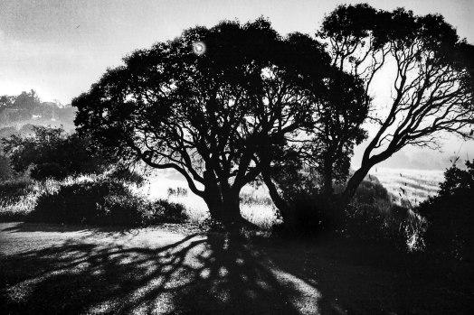 Tree and Shadows